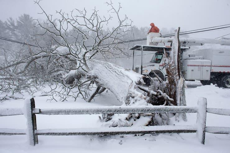 Los árboles caídos tras la tormenta dificultan las tareas para quitar la nieve