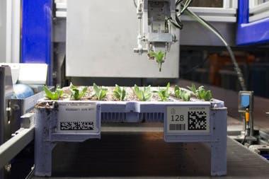 El robot que maneja los plantines de Florensis
