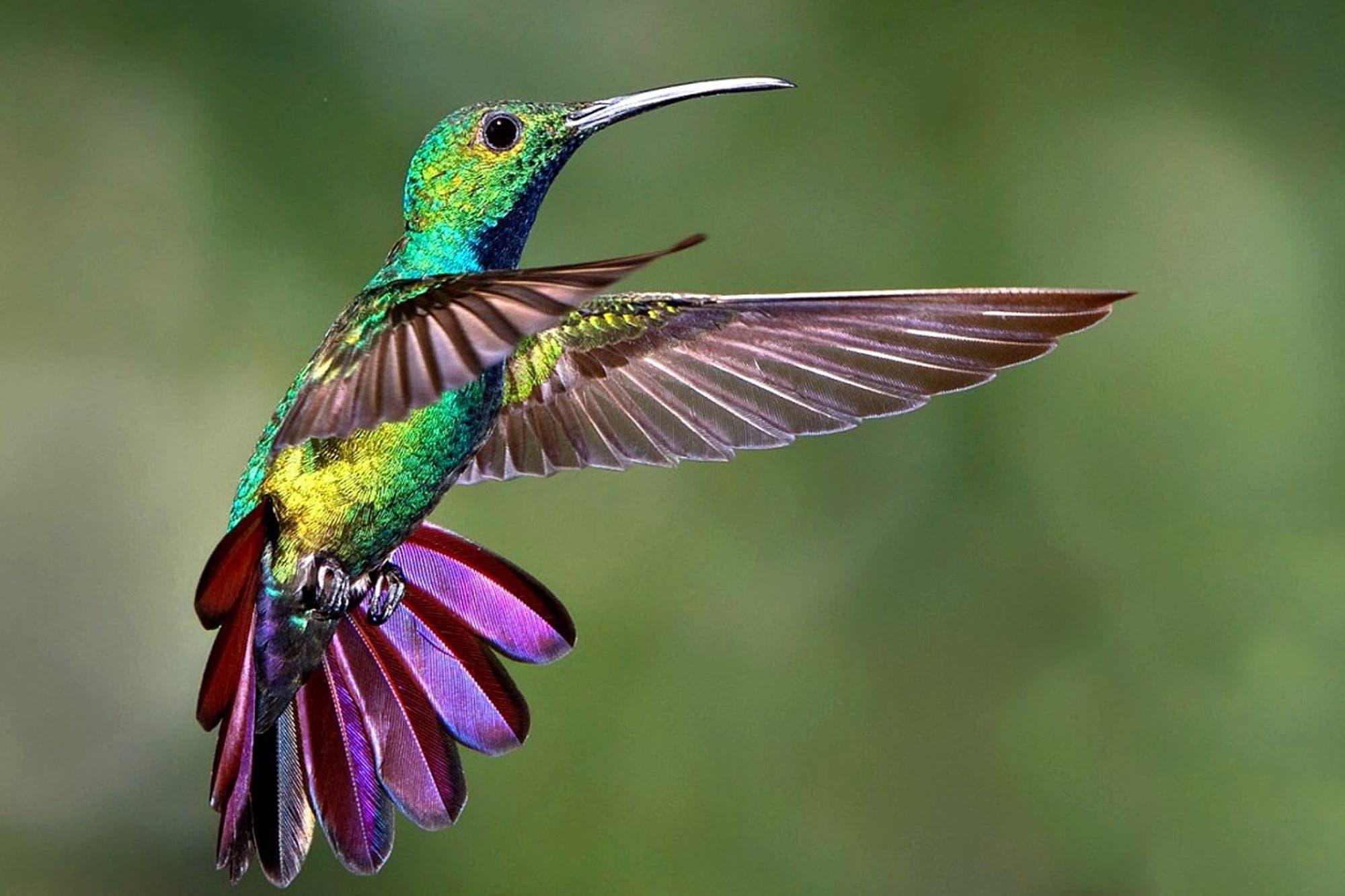 Los colibríes Comen Mosquitos