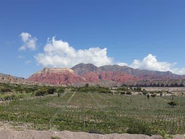 La imponente Quebrada de Humahuaca es el paisaje de los viñedos de Amanecer Andino