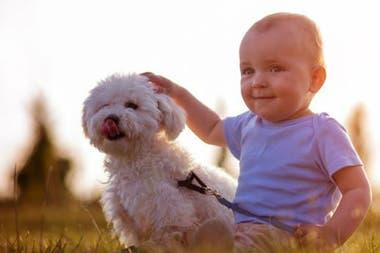 Gracias a la evolución, los perros han aprendido a imitar la expresión de los bebés, algo que no pueden hacer físicamente los gatos