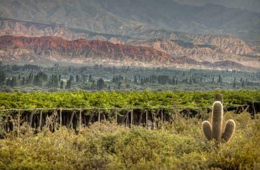 En Catamarca, Chañar Punco es uno de los nuevos hot spots que ofrecen vinos distintos, con mucha personalidad