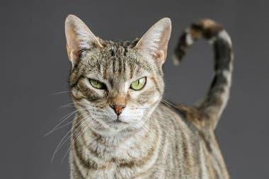 Para mantener una mejor relación con los gatos, es crucial aprender a leer mejor su comportamiento