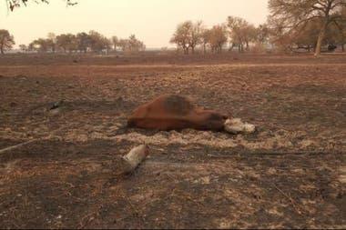 El fuego provocó pérdidas de ganado