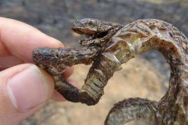 Aximoff ha encontrado muchos ejemplares de animales calcinados en los incendios forestales