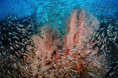 """Mención de honor: """"Arrecife de peces de vidrio"""" tomada en Raja Ampat, Indonesia por Nicholas More"""