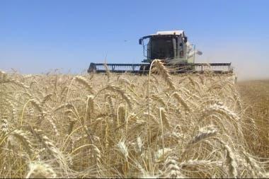 Los molinos necesitan comprar en total 6,6 millones de toneladas del cereal