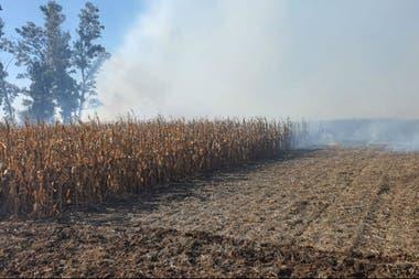 El fuego en Oliva, Córdoba, que afectó a un lote con maíz y a otro con trigo del vicepresidente de CRA