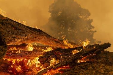 """Cerca de los Ángeles el incendio """"Bobcat Fire"""", que sigue fuera de control, devastó más de 9.000 hectáreas, según los bomberos"""