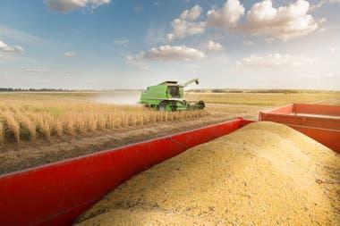 Del complejo soja el 84% no se exporta como grano. Lidera harina con el 54%