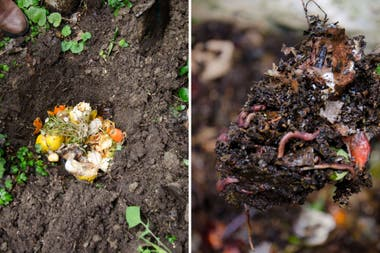 Los ingredientes del compost irán perdiendo la forma y terminarán de color negro: a partir de ese momento el compuesto puede usarse como abono.