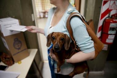 Algunos ciudadanos llevaron a sus mascotas a los lugares de votación