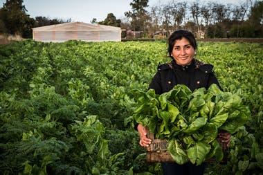 Un mujer recolecta verduras