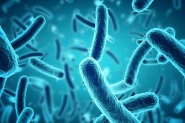 Entre el 60% y el 100% de las bacterias en las muestras estaban vivas.
