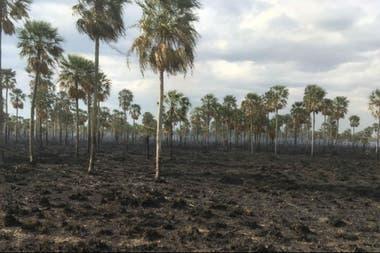 Un campo en Formosa que fue afectado por los incendios
