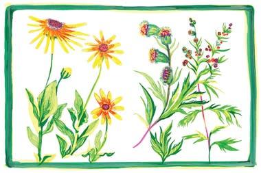 hierbas medicinales antiparasitarias