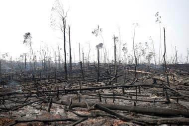 Troncos quemados en una zona afectada por los incendios en el Amazonas