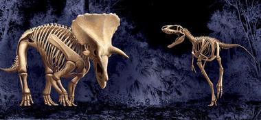 """El Museo de Ciencias Naturales de North Carolina ya promociona la exhibición de los """"Dinosaurios en Duelo"""", que estará lista recién para 2022 (NCMNS)"""