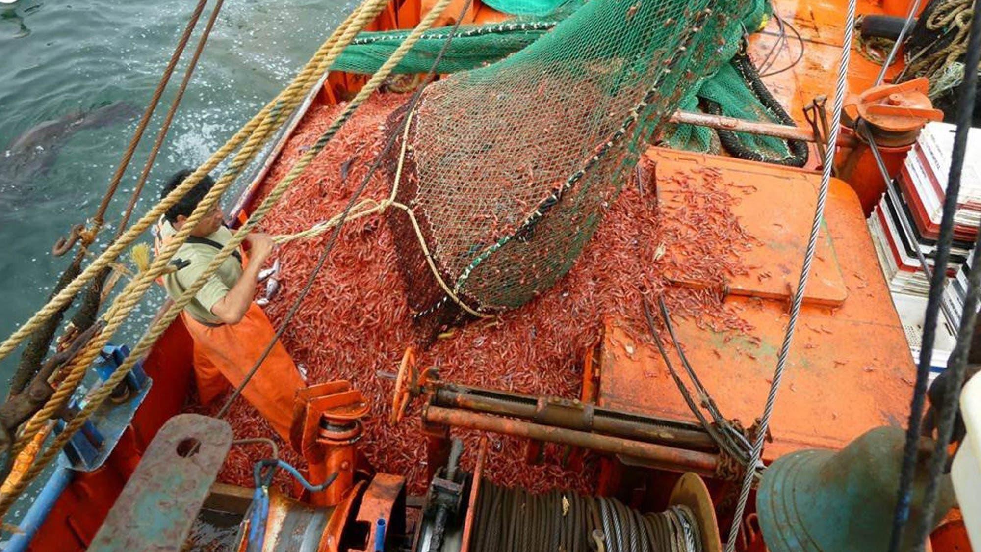Abren un sector de aguas nacionales para la pesca de langostino