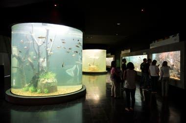 El acuario se puede visitar seis días a la semana ya que los lunes, o primer día posterior a un feriado, cierra para hacer mantenimiento