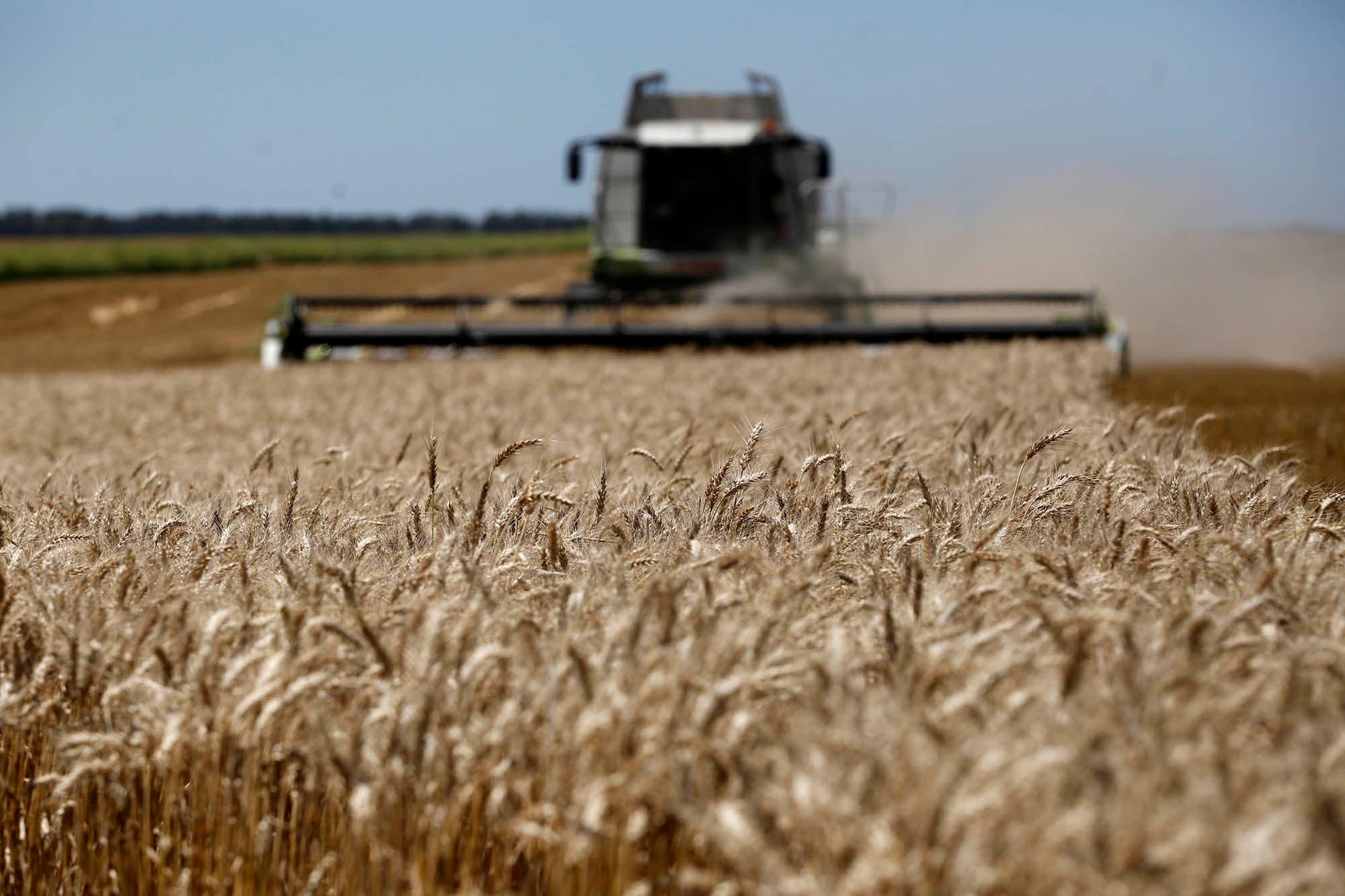 Otra jornada activa para el trigo argentino, por nuevas subas en sus precios y por el incremento de las ventas