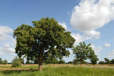 Los árboles protegen de la exposición directa a los rayos UV y evitan la erosión terrestre