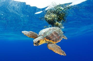 """Quinto Puesto: """"Tortuga marina atrapada"""" tomada en las Islas Canarias por Francis Pérez"""