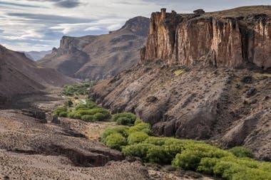 Gentileza Rewilding Argentina