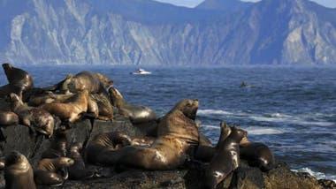 Hay una gran biodiversidad en la península de Kamchatka.